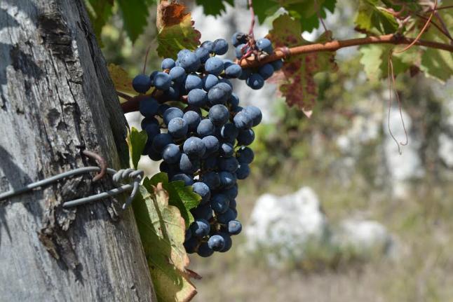 Monti Cecubi e Abbuoto: il territorio e il vino degli antichi Romani
