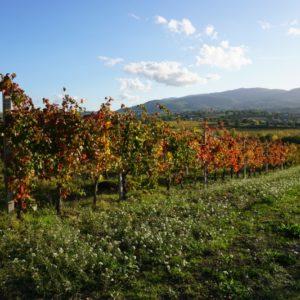 Autunno in Umbria: tra i filari di Cantina Le Cimate